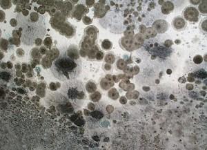 mold remediation vero beach
